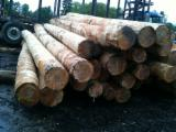 null - Hemlock / Poplar Industrial Logs, 20+ cm Diameter