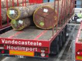 Find best timber supplies on Fordaq - Vandecasteele Houtimport - Iroko FSC logs