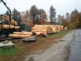 Pine,Hemlock, Fir saw logs