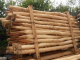Hardwood  Logs For Sale -  Conical Shaped Round Wood, Acacia