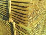 All Coniferous Softwood Logs - All Coniferous 5 cm stakes Cylindrical Trimmed Round Wood from Poland