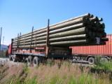 原木待售 - 上Fordaq寻找最好的木材原木 - 杆, 红松