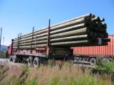Softwood  Logs For Sale - Impregnated wooden poles for electricity and telecommunication lines
