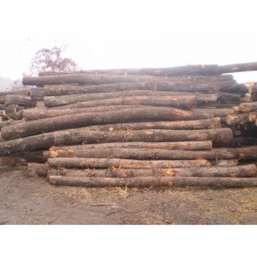 oak-logs-for