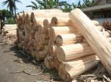we sell fresh wood logs pinu,teak,prabesia,merbau,rubber wood