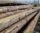 Softwood  Unedged Timber - Flitches - Boules Pine Pinus Sylvestris - Redwood For Sale - Loseware (unedged boards, sorted and bundled), Larch (Larix spp.), PEFC/FFC