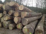Forest And Logs - Sell ASH Logs