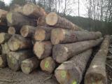 Păduri şi buşteni - Vand Frasin  PEFC/FFC