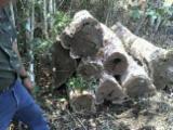 Hardwood  Logs - Tropical hardwood logs