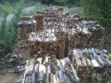 Firewood Cleaved - Not Cleaved, Firewood/Woodlogs Not Cleaved, Oak (European)