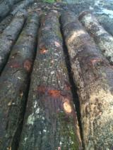 We Need Oak Saw Logs, 40+ cm Diameter