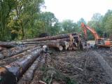Nadelrundholz Zu Verkaufen Frankreich - Schnittholzstämme