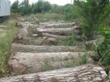 Slovenia - Furniture Online market - Walnut logs for sale