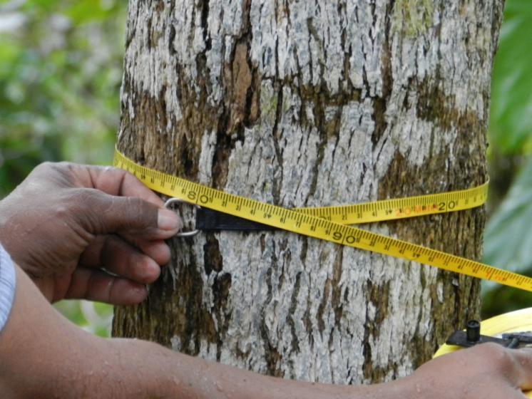 teak-Wood-%28Tectona-Grandis%29-