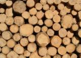 Italy Softwood Logs - Fir/Spruce 24-80 cm A, B, C Saw Logs
