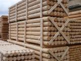 Softwood  Logs For Sale Poland - Poles, Pine (Pinus sylvestris) - Redwood, FSC