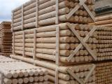Pine  - Scots Pine 6-18 cm high quality Cylindrical Trimmed Round Wood from Belarus