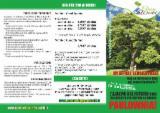 Tropical Wood  Logs Italy - piantine, cotevisa 2, Romania