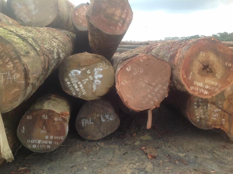 Saw-Logs--Tali-%28Missanda--Elune--Muave--Kassa%29