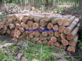 Colombia Standing Timber - SALE OF STANDING teak trees