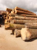 Hardwood  Logs For Sale - European White oak logs - veneer quality