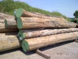 Tropical Wood  Logs Teak - Bruma Teak Logs