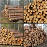 Softwood  Logs All Coniferous - Buy Pine Logs