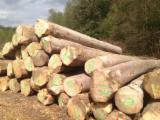 Hardwood  Logs - Hard MAPLE / SYCAMORE logs