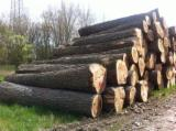 Hardwood  Logs Netherlands - Poplar Logs