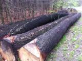 Finden Sie Holzlieferanten auf Fordaq - Alpawood - Schnittholzstämme, Eiche