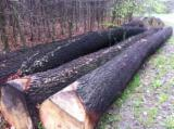 Netherlands Hardwood Logs - White Oak Logs