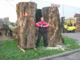 Hardwood  Unedged Timber - Flitches - Boules For Sale - BIRDSEYE - SYCAMORE - BROWNHEARTED and WHITE -AD or KD