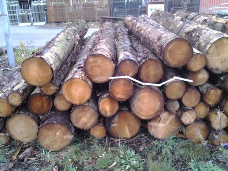 Saw-Logs