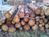 Saw Logs, Fir/Spruce
