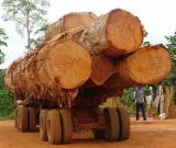 Tropical Wood  Logs For Sale USA - African wood from Cameroon
