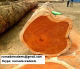 Madera Tropical  Troncos - Troncos para Aserrar, Sapelli (Sapele, Aboudikro, Penkwa, Lifaki), Camerún