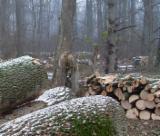 Drva Za Potpalu - Pelet - Opiljci - Prašina - Ivice ISO-9000 - Jasen (bijeli) Drva Za Potpalu/Oblice Necepane ISO-9000 sa Bugarska