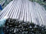 No Treatment Softwood Logs - Thin spruce wood poles