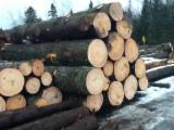 Canada Timber Services - Sawing Services from Canada, Quebec