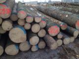 锯材级原木, 云杉-白色木材