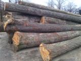 we sell a large variety of round wood - logs for sawmills or others.