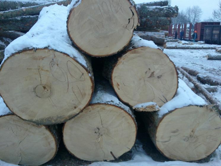 Schnittholzst%C3%A4mme--Kiefer----F%C3%B6hre--Seekiefer--Sibirische-Kiefer
