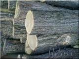 ACACIA (ROBINIA)LOGS BUY