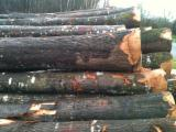 Hardwood  Logs Demands - Red american oak (origin:Europe) request