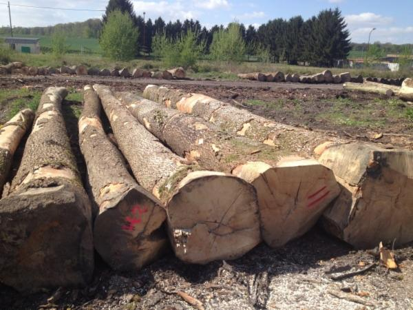 Selling ASH logs from our direct productions