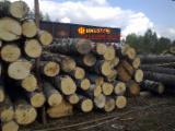 Foreste - Vendo Tronchi Da Sega Betulla