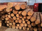 Wood Logs For Sale - Find On Fordaq Best Timber Logs - Saw Logs, Pine (Pinus sylvestris) - Redwood