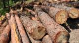 Softwood  Logs - Sell ​​red pine logs thickness of from 20 to 50 in diameter, the lengt