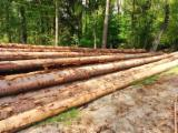 Softwood  Logs For Sale - Saw Logs, Fir/Spruce