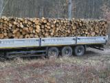 ISO-9000 Certified Firewood, Pellets And Residues - ISO-9000 Oak (European) Firewood/Woodlogs Not Cleaved -- mm